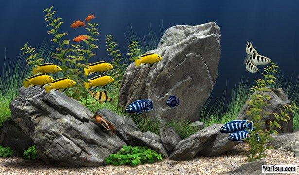 Dream Aquarium(梦幻水族馆)V1.240 汉化增强版