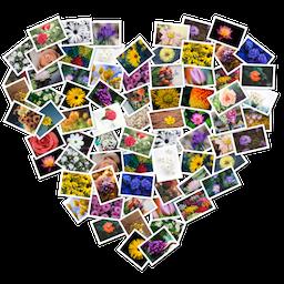 FigrCollage 3.0.3 Mac 破解版 自定义照片拼贴应用